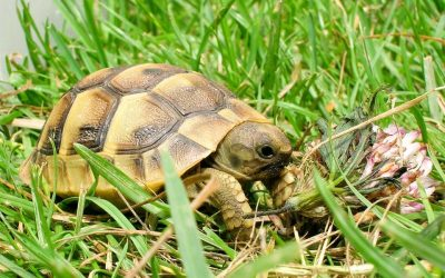 Et si on adoptait une tortue ?